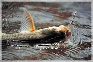 сроки запрета на рыбалку в приднестровье