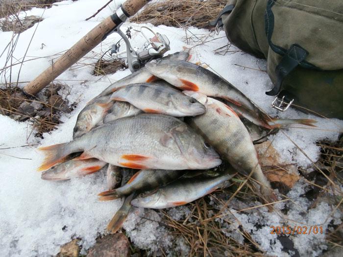 клев рыбы сегодня в удомле